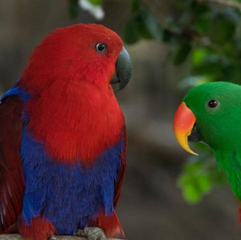 Foto de aves del parque Tricao